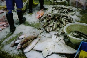 Jurong Fishery Port Photo-10